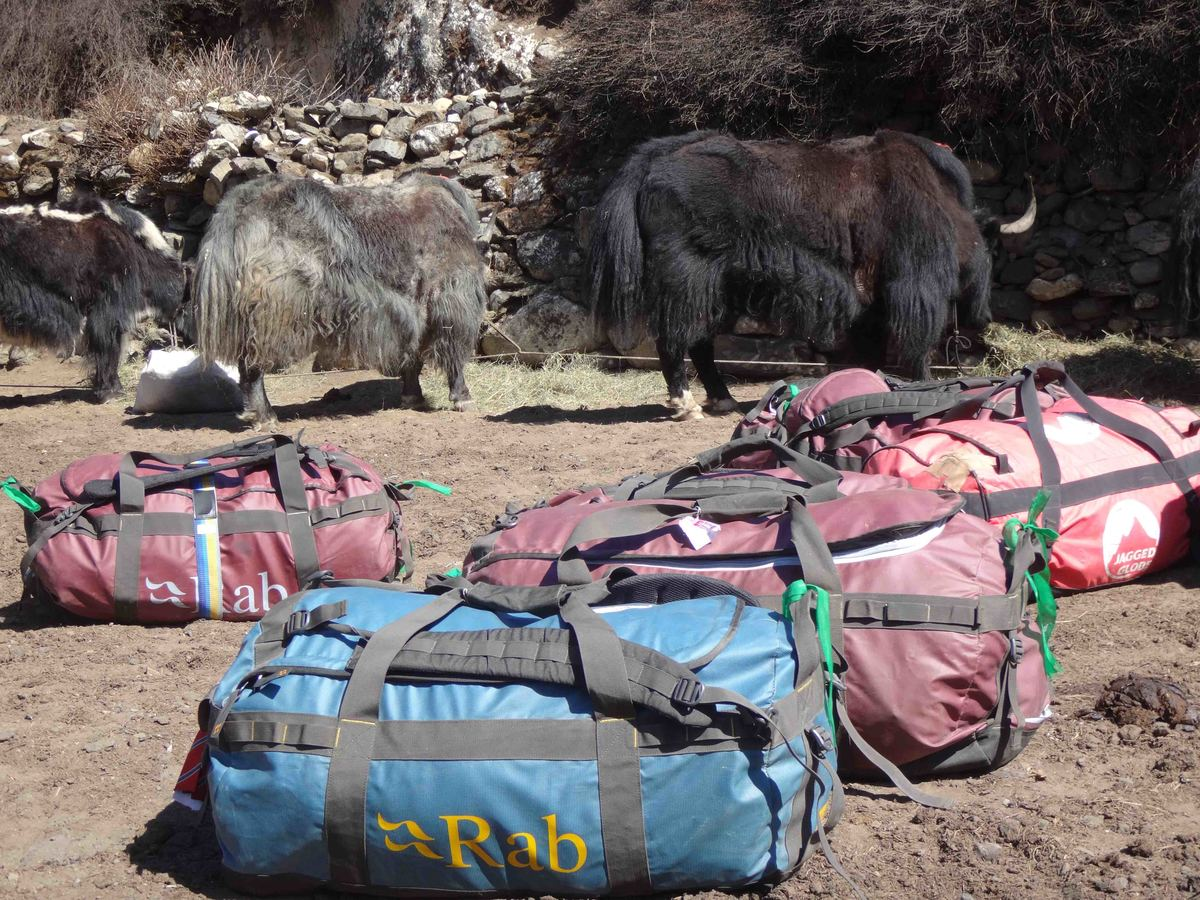 29A._Bags_and_yaks_Dingboche.jpg